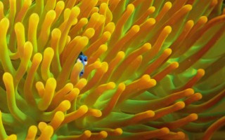 Finding_Dory_06