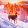 A_Dogs_Way_Home_06