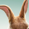Peter_Rabbit_02